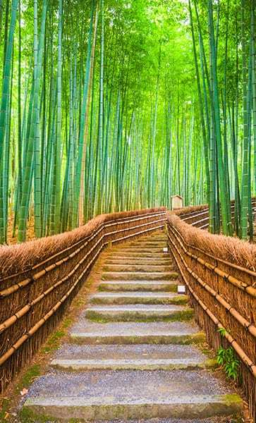 a picture of a path metaphorical to Reed Psychological Services